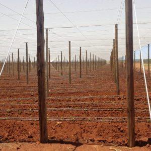 Untreated Poles 18